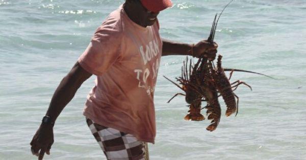 Lobster lunch on Tobago Cays | Trinidad & Tobago | Pinterest | Trinidad, Caribbean and South ...