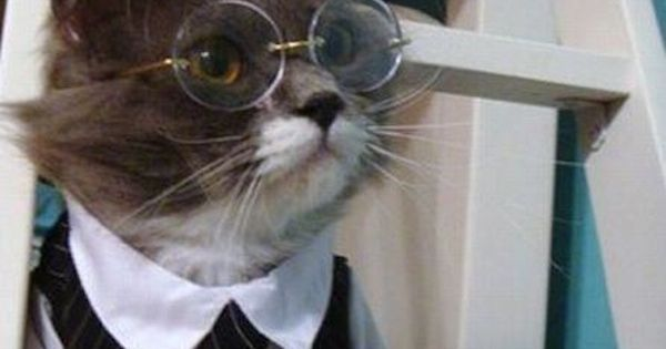 Sexy Harry Potter | The 57 Greatest Pet Costumes EVER