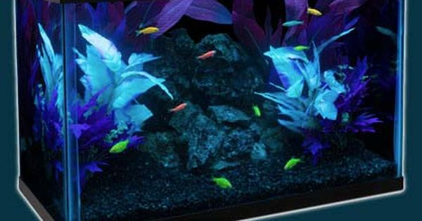 Glofish 10 Gallon Tank Glofish Cool Fish Tanks Fish Tank Decorations