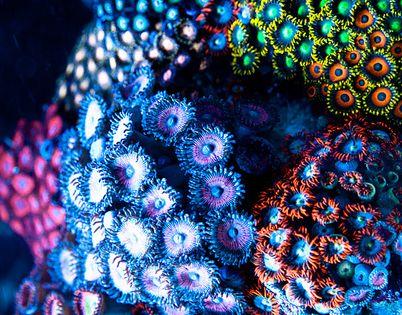 Underwater flowers DeborahPerham