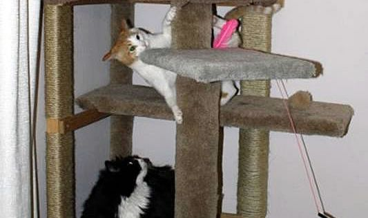 How To Make A Cat Climbing Tree Without Buying Any New