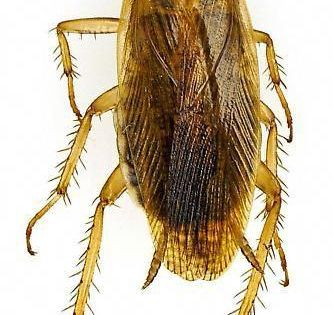 Pin On Organic Pest Control