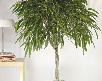 9 zimmerpflanzen welche die luft reinigen und fast. Black Bedroom Furniture Sets. Home Design Ideas