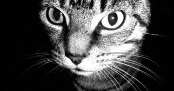 tosh.o kitten play