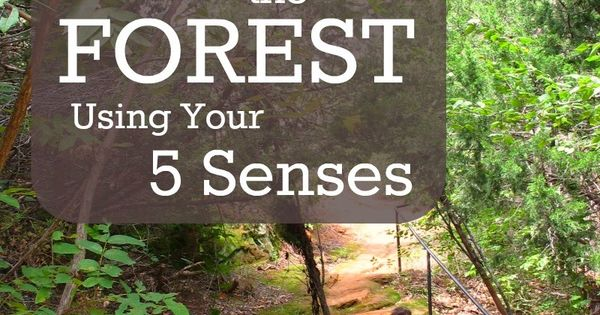 Explore the forest using your 5 senses. Great nature activity for children