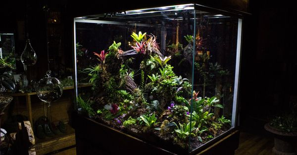 Sherman tanks terrarios plantas pinterest for Terrario vertical