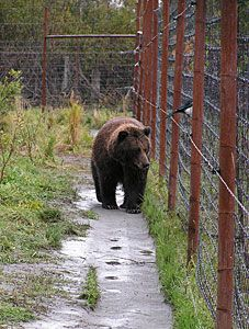 Bears Electric Fences This Will Provide Essential Info And