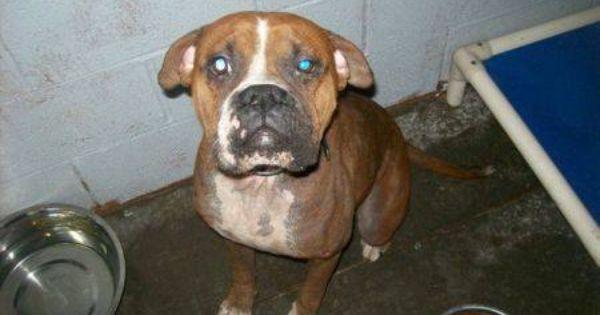 Found Ravenna Kentucky Estill County Animal Shelter Ravenna Ky