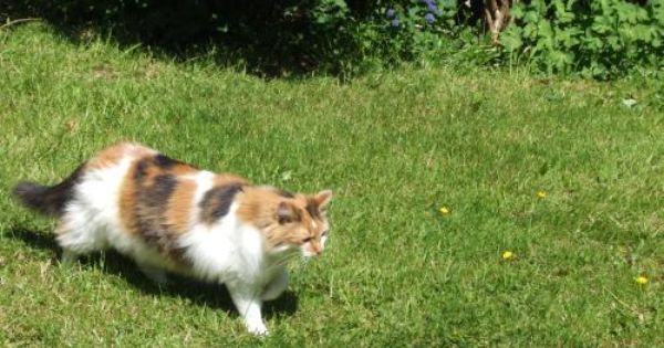 Missing Stolen Cat Tortoiseshell Calico From Lighthorne Heath Leamington Spa In Leamington Spa Yi501cbh1 Beautiful Kittens Cats And Kittens Kitten For Sale