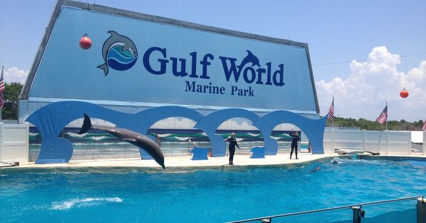 Best Dolphin Show Gulf World Marine Park Panama City