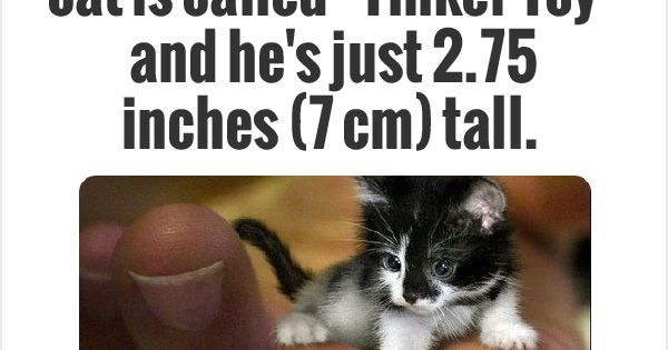Tinker Toy Cat Picture