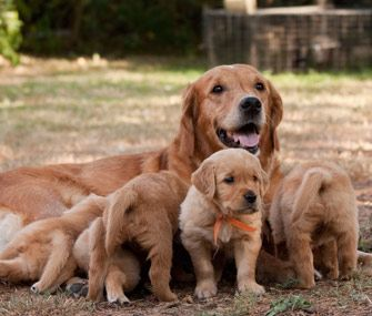 Tough Love How Animals Educate Their Young Pregnant Dog Dog