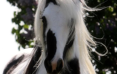 beautiful black and white horse-yeah i am still 5 and want a