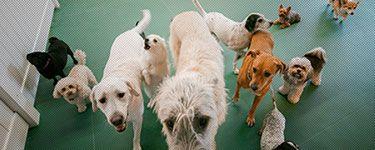 Pooch Hotel Lincoln Park Dog Boarding Dog Grooming Dog Daycare