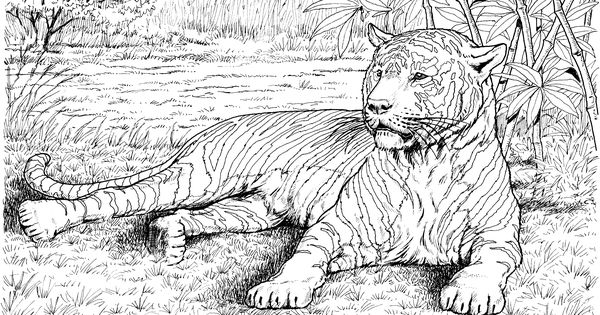 Related Posts Wildlife Coloring