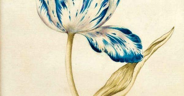 Tulip Tattoo Idea Tattoos At Repinned Net