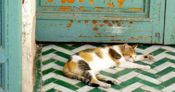herringbone tile. turquoise. calico cat.