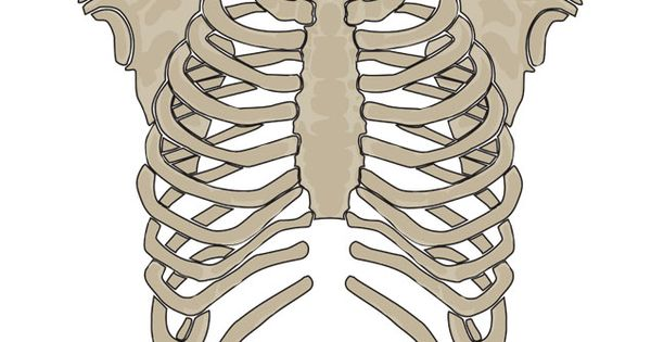 teacher's pet - human skeleton display - free classroom display, Skeleton