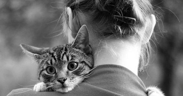 I love kitty hugs cute baby Animals Baby Animals| http://cute-baby-animals-452.blogspot.com