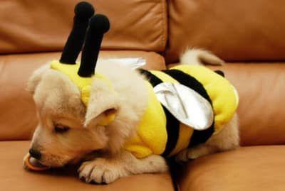 28 Pictures Of Golden Retriever Puppies That Will Brighten Your