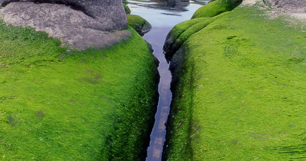 Mossy Inlet, Iceland photo via lonelycoast.