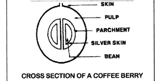 Coffee Processing In The Home Coffee Community Coffee Coffee Beans