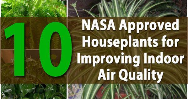 nasa air quality plants - photo #27