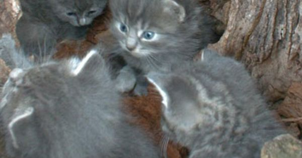 Kittens Feral Kittens Feral Cats Cute Animals