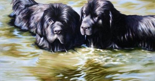 Browse Art Deviantart Newfoundland Big Dogs Dog Paintings