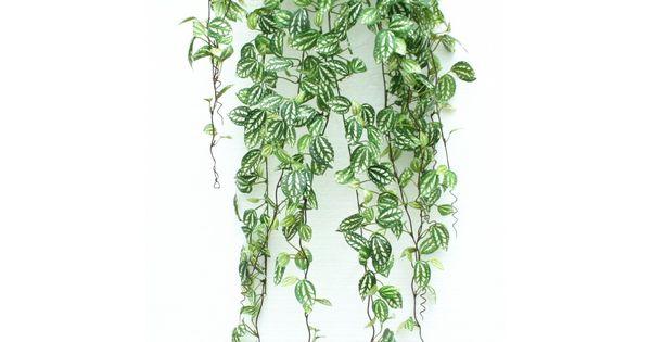 plante retombante accueil plantes artificielles plantes artificielles retombantes. Black Bedroom Furniture Sets. Home Design Ideas