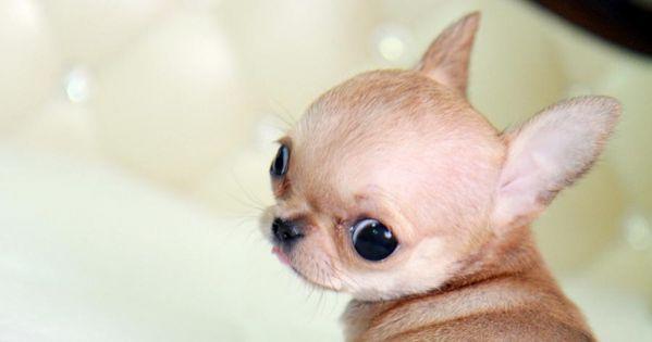 Ahhh cute lil pup - how can anyone say NO? cutecute little