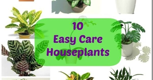 10 easy to care house plants health natural living for Indoor plants easy maintenance