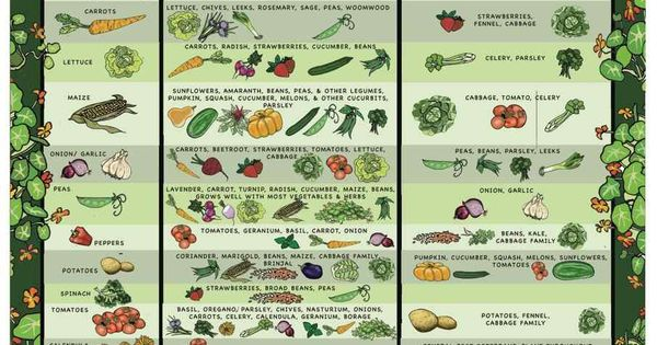 Companion Planting chart for organic pest control and happy plants!