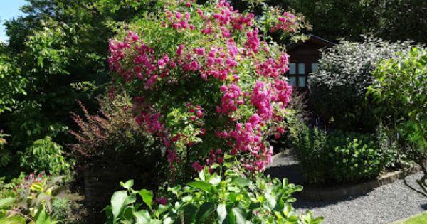 Heim Erde Hoch Hinaus Bepflanzung Pflanzen Schattenbeet