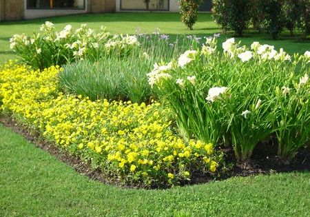 macizos canteros jardineria