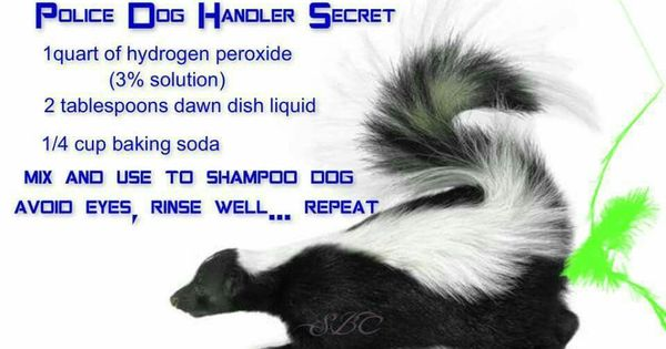 How To Get Rid Of Skunk Smell From Dog Fur