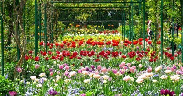 Autour De Paris Les Boucles De La Seine Carigami Jardin Monet Jolie Fleur Monet