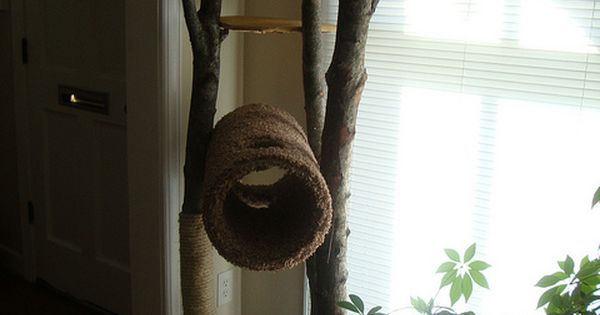 Our homemade rustic cat tree. The cat LOVES this thing.