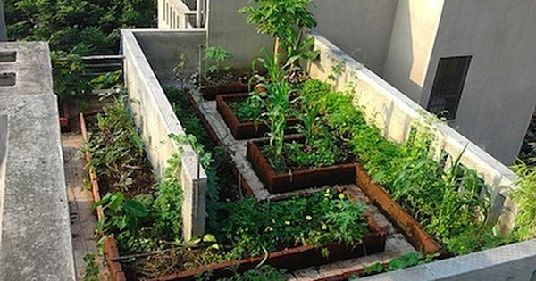 Foods You Can Regrow From Kitchen Scraps Regrow Vegetables Home