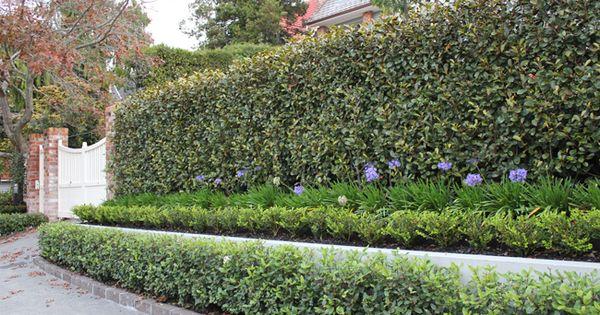 Auckland Garden Design Fest Layered Planting Garden