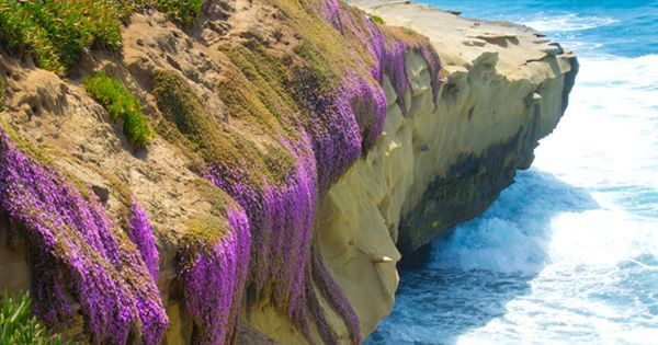 La Jolla Cove, La Jolla, California. *I've heard it's a beautiful beach.