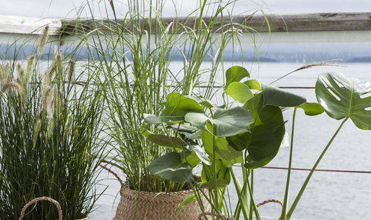 Breezy ornamental grasses in sea grass planters are a for Ornamental sea grass