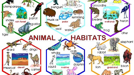 habitat and species module guide Some habitats are rich in terms of number of species or may host threatened   which bring together three interlinked modules on habitat types, species and  sites  ecosystems and habitats interpretation manual of european union  habitats.