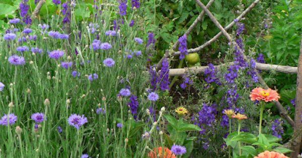 Visit My Garden Annual Flower Combos Annual Flowers Flowers Gardening Blog