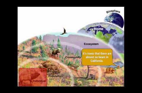 ecology levels of organization organisms communities biomes biosphere youtube. Black Bedroom Furniture Sets. Home Design Ideas