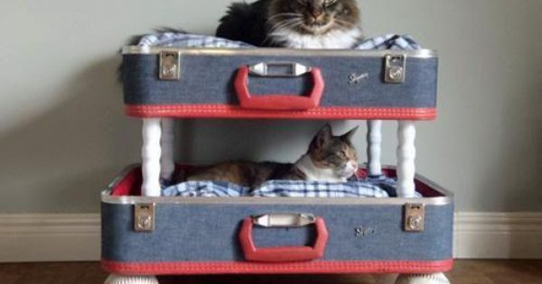 Pet Beds from repurposed items (such as this cat bed from old