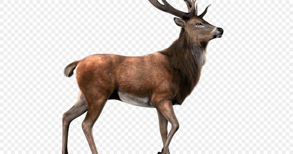 Red Deer Png Download Deer With Transparent Background Hq Png Image 1600 1200 Png Download Free Transparent Backgrou Red Deer Transparent Background Deer