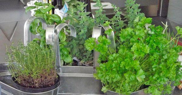 Pasos para plantar hierbas arom ticas c mo mantener las - Plantar hierbas aromaticas ...