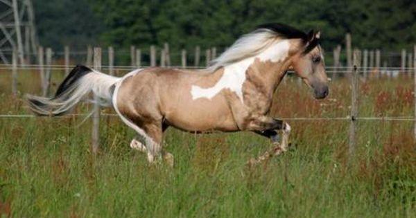 Hengste Wrangler Texas Olena Pferd Humor Hubsche Pferde Schonste Pferde