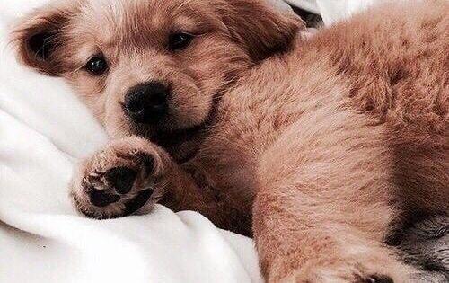 Cute Puppy Dog Animal Pets Baby Animals Cute Animals